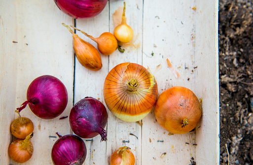 Onion「Close up of crate of variety of onions」:スマホ壁紙(18)