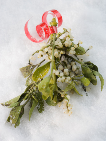 Mistletoe「Close up of mistletoe in snow」:スマホ壁紙(4)