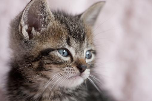 子猫「Close Up of Kitten」:スマホ壁紙(17)