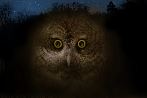 Multiple Exposure「Close up of owl face and night sky.」:スマホ壁紙(16)