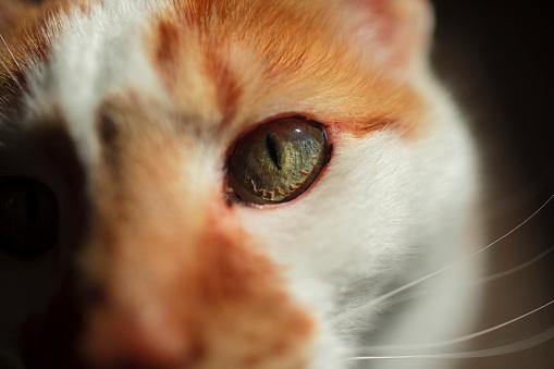 Eyesight「Close up of tabby cat's face in the morning light near the back door」:スマホ壁紙(9)