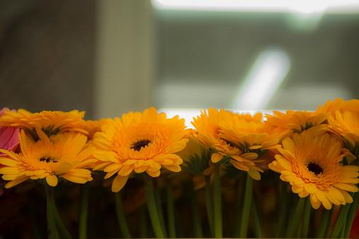 Flower Shop「Close up of yellow gerbera daisies」:スマホ壁紙(1)