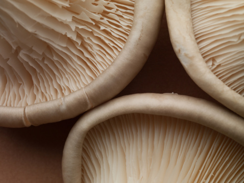 Edible Mushroom「Close up of oyster mushrooms」:スマホ壁紙(8)