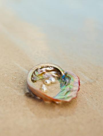 貝殻「Close up of pearls in oyster shell」:スマホ壁紙(17)