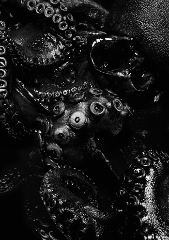 Octopus「Close up of black octopus」:スマホ壁紙(4)