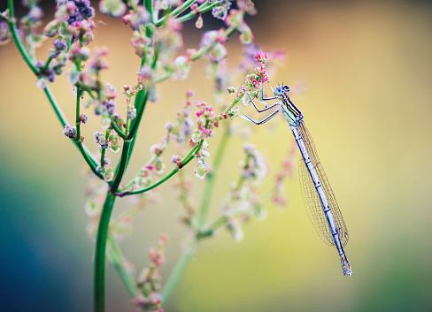 とんぼ「Close up of dragonfly on wildflower」:スマホ壁紙(8)