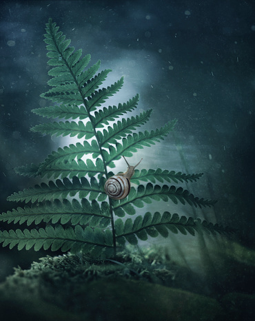 snails「Close up of snail climbing on leaf」:スマホ壁紙(12)