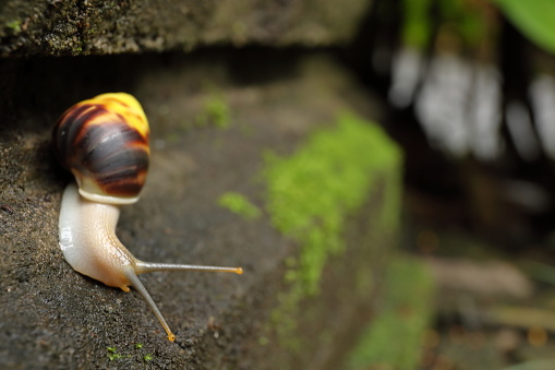 snails「Close up of snail (Achatina achatina) on mossy shrine」:スマホ壁紙(16)