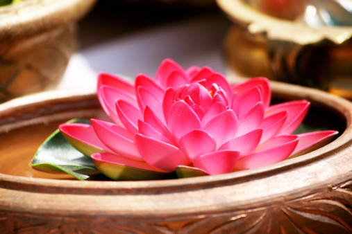 Water Lily「Close up of a lotus in basin」:スマホ壁紙(17)