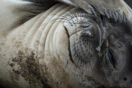 Sea Lion「Close up of a cute sea lion」:スマホ壁紙(8)