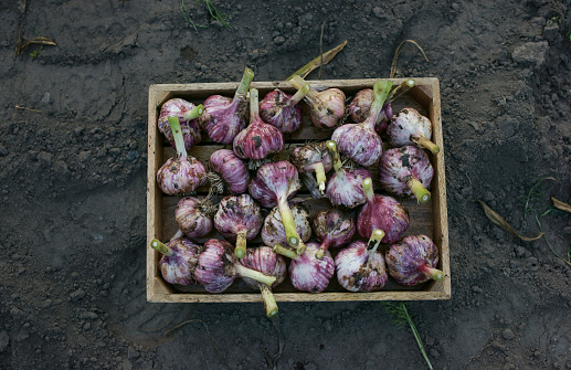 Garlic「Close up of garlic in basket」:スマホ壁紙(10)