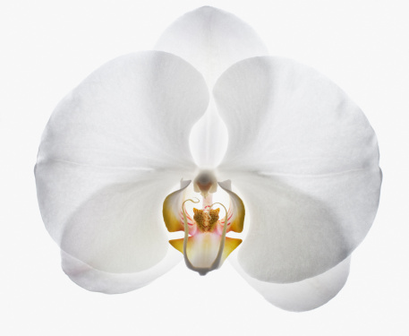 Extreme Close-Up「Close up of white orchid」:スマホ壁紙(7)