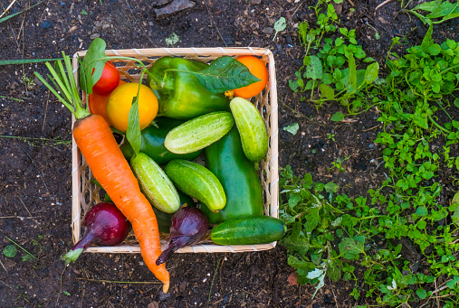 Russia「Close up of basket of fresh vegetables on garden soil」:スマホ壁紙(10)
