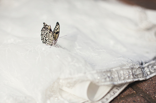 結婚「Close up of butterfly on wedding dress」:スマホ壁紙(14)
