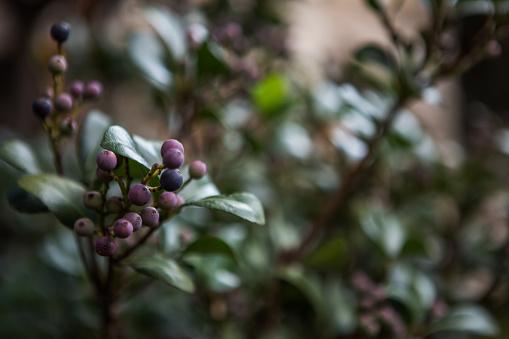花「Close up of small berries, with blurry background, Johannesburg, Gauteng, South Africa」:スマホ壁紙(16)