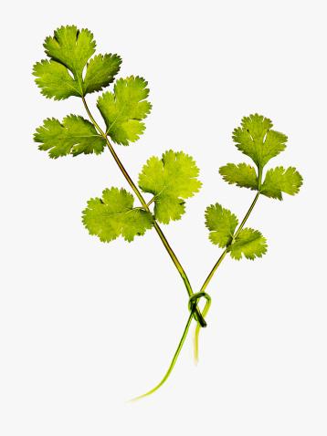Garnish「Close up of cilantro leaves」:スマホ壁紙(19)