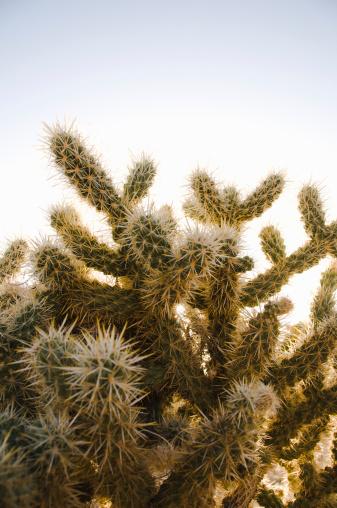 Needle - Plant Part「Close up of cactus needles in the desert」:スマホ壁紙(6)