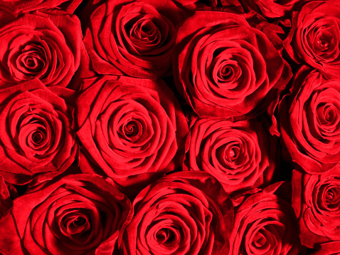 Rose - Flower「Close up of red roses」:スマホ壁紙(5)
