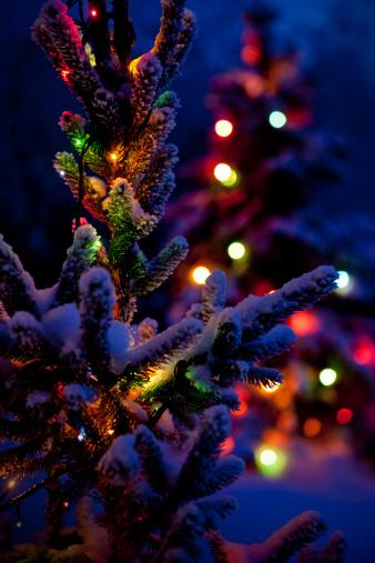 Christmas Lights「Close up of Christmas tree at night」:スマホ壁紙(8)