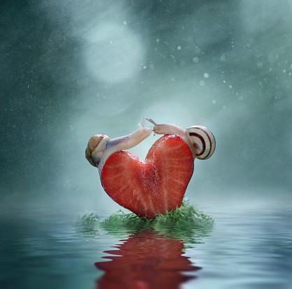 snails「Close up of snails balancing on heart-shaped strawberry slice」:スマホ壁紙(13)