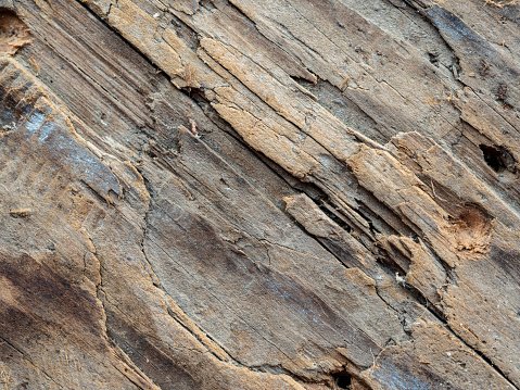 Queensland「Close up of tree bark」:スマホ壁紙(18)