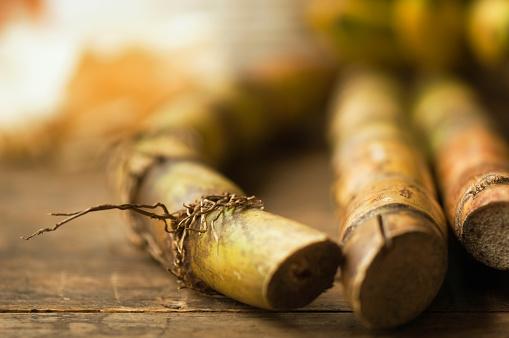 Sugar Cane「Close up of sugar cane stick」:スマホ壁紙(6)