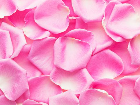 バラの花びら「クローズアップなピンクのバラの花びら」:スマホ壁紙(9)