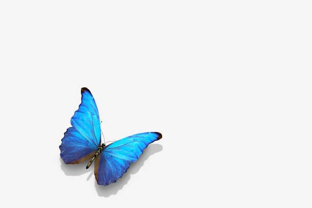 Close up of blue butterfly:スマホ壁紙(壁紙.com)