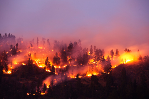 Accidents and Disasters「A forrest fire burning the side of a mountain in Montana.」:スマホ壁紙(9)