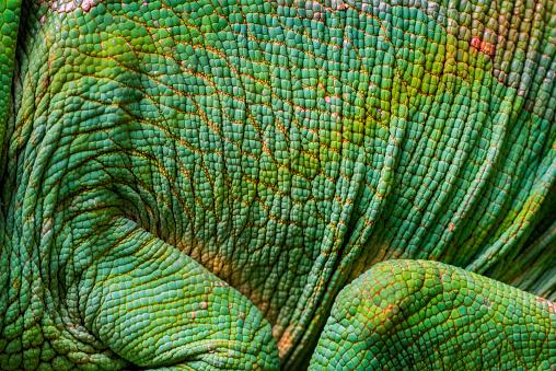 Lizard「Chameleon portrait, Madagascar」:スマホ壁紙(14)