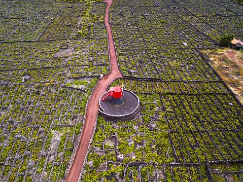 Basalt「Vineyards of the Azores, Pico Island, Portugal」:スマホ壁紙(19)