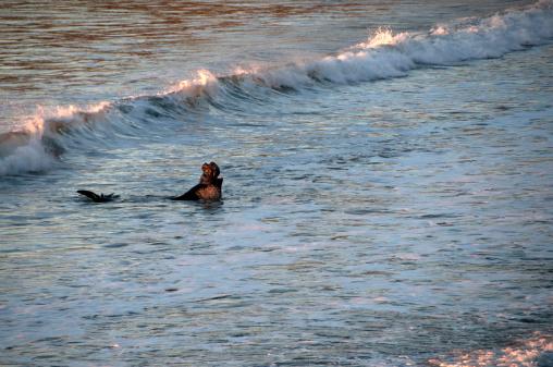 Big Sur「Elephant Seal」:スマホ壁紙(17)
