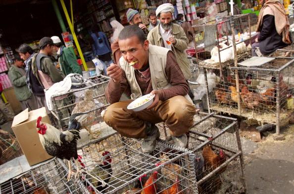 Kabul「Bird Flu Outbreak Spreads Further Afield」:写真・画像(2)[壁紙.com]