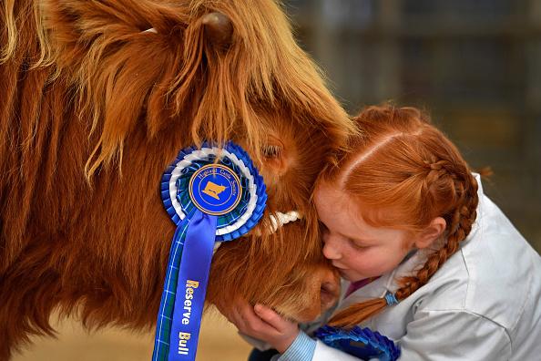 Bestpix「The Annual Oban Highland Cattle Sale」:写真・画像(19)[壁紙.com]