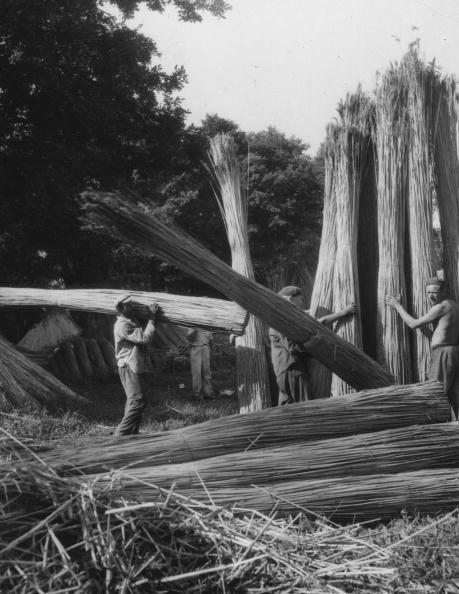 Lake Balaton「Reed Harvest」:写真・画像(6)[壁紙.com]