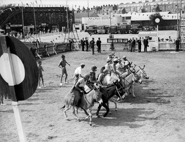 Livestock「Donkey Derby」:写真・画像(16)[壁紙.com]