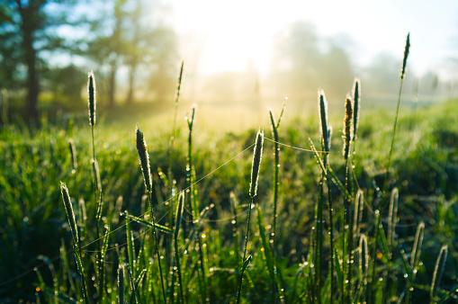 草地「朝の草地」:スマホ壁紙(2)
