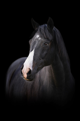 Stallion「Head of a black horse on black background」:スマホ壁紙(4)