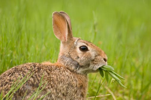 Eating「Feeding Rabbit」:スマホ壁紙(2)
