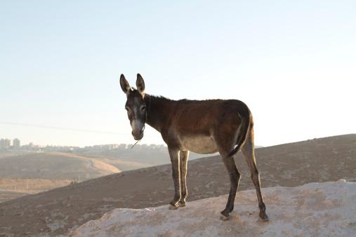 Ass「Donkey in Tabana Bedouin camp」:スマホ壁紙(18)
