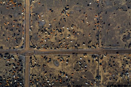 Eating「Beef Cattle Farm, Aerial View」:スマホ壁紙(5)