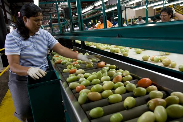 Tomato「The FDA Focuses On Florida And Mexico In Tomato Salmonella Investigation」:写真・画像(8)[壁紙.com]