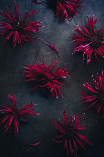 Bergamot「Edible Flower: Bergamot」:スマホ壁紙(11)