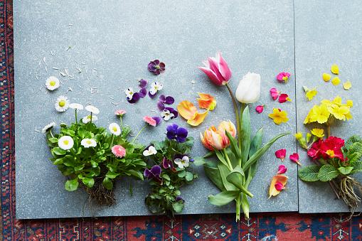 チューリップ「Edible flowers for plant profile spread left」:スマホ壁紙(15)