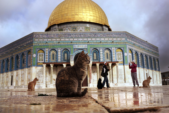 Jerusalem「Jerusalem: Tensions And Rituals In A Divided City」:写真・画像(13)[壁紙.com]