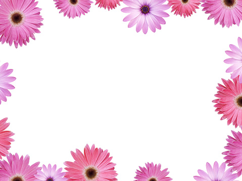 Frame - Border「Pink and Violet flower frame with copyspace XXL」:スマホ壁紙(6)