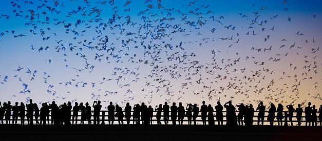 Music Festival「Bats flying over bridge」:スマホ壁紙(6)