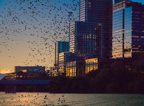 Music Festival「Bats flying over lake with cityscape」:スマホ壁紙(15)