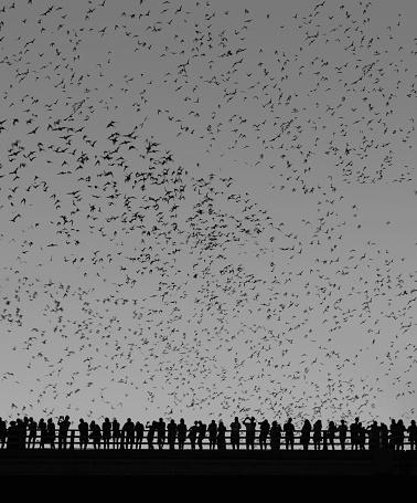 Music Festival「Bats flying over bridge - Black and White」:スマホ壁紙(1)