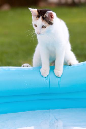 Mixed-Breed Cat「kitten at pool」:スマホ壁紙(1)
